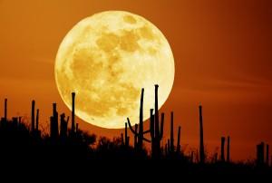 desert inspires meditation