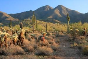 healing desert